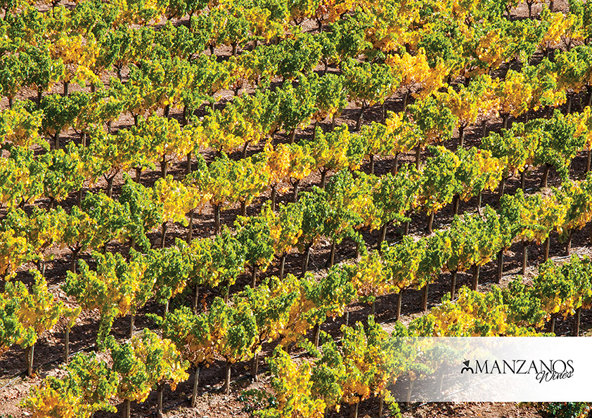 Viñedos Manzanos Wines