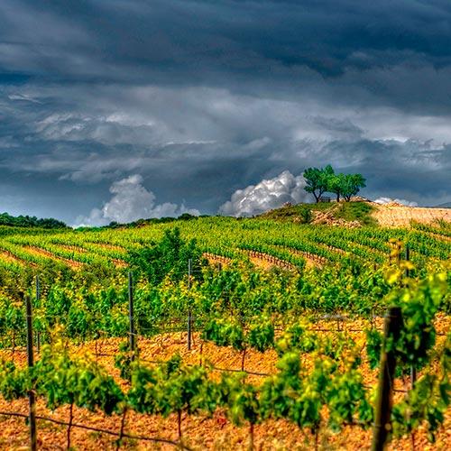Fotografías - Viñedos Manzanos Wines