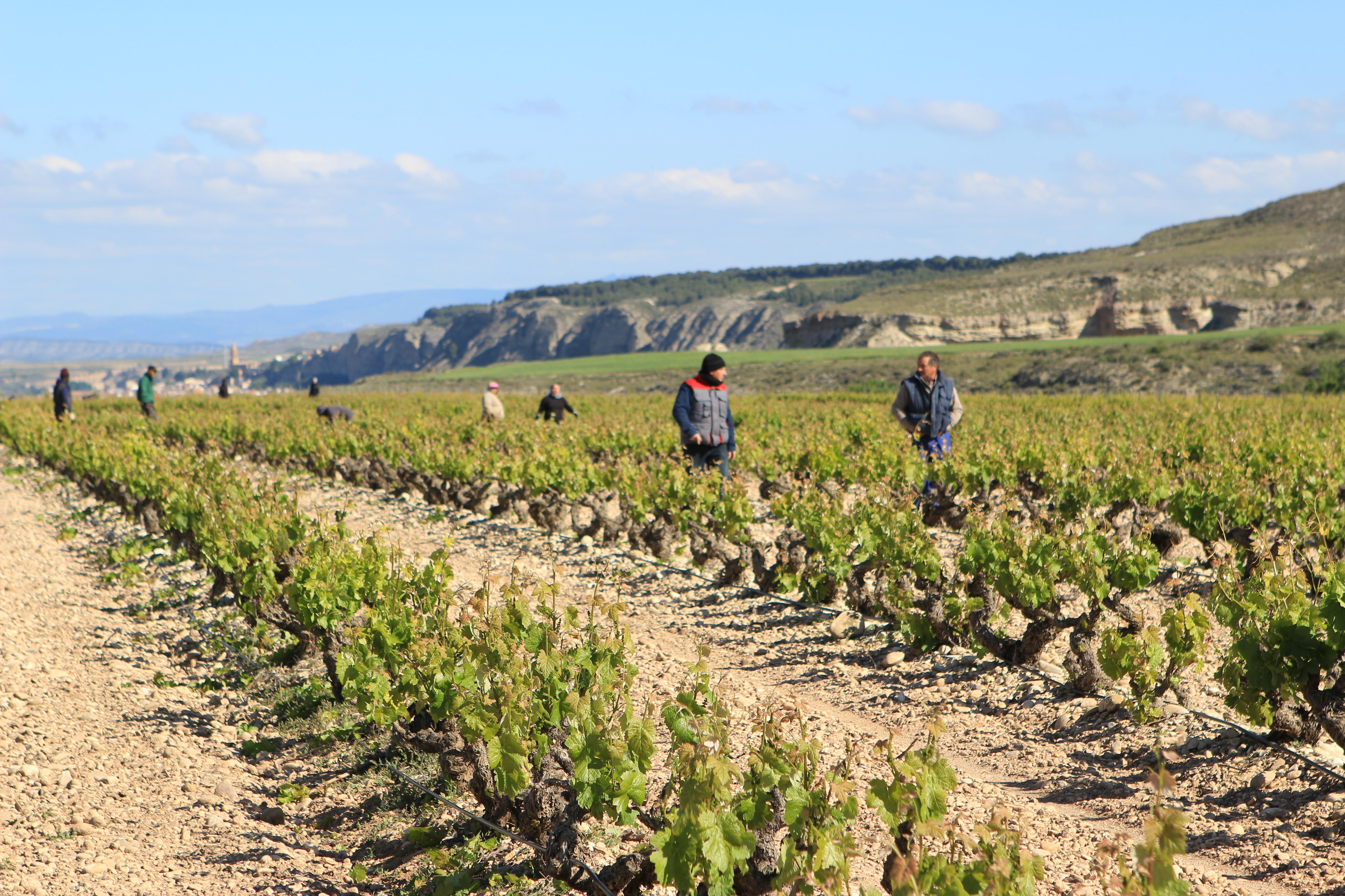 Manzanos Wines - Hectáres Viñedos